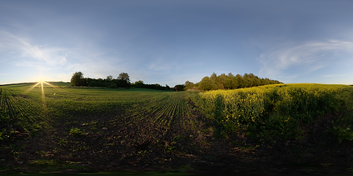 Split field at dawn