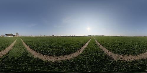 A dirt road in a clean farm field