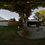 Thumbnail: A backyard at dawn