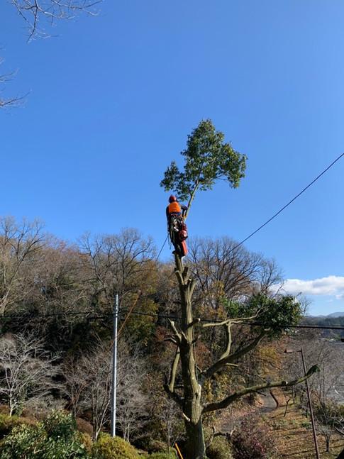 treecareservice05