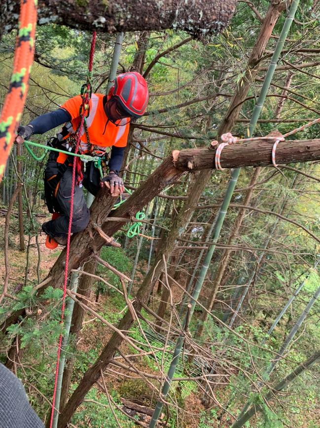 treecareservice04