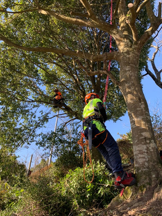 treecareservice09