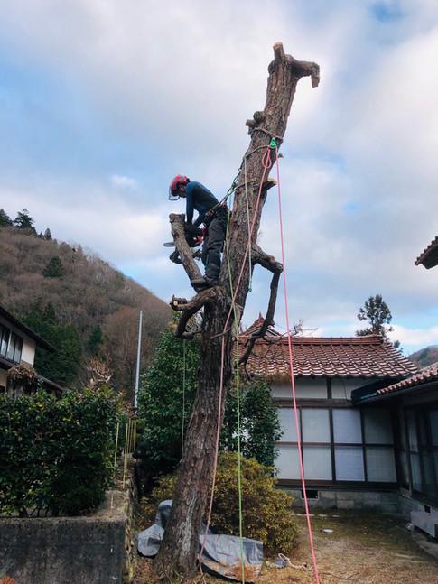 treecareservice07