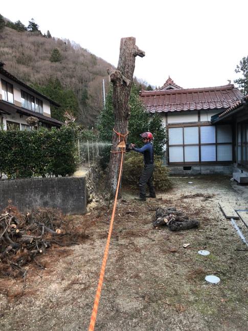treecareservice08
