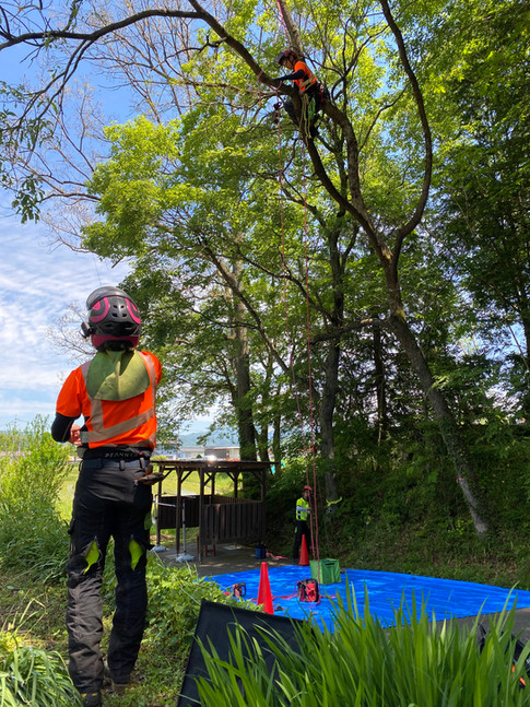 treecareservice013