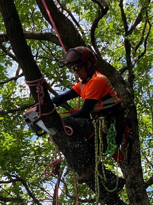 treecareservice012