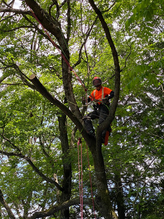 treecareservice010