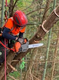 treecareservice03