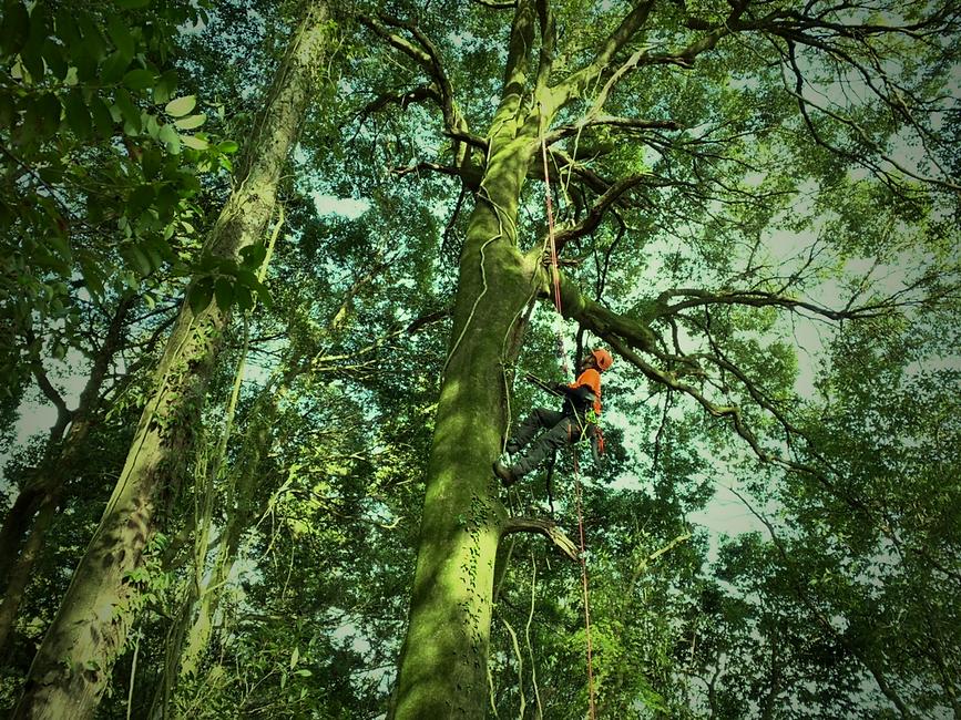treecareservice01