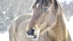 Home Horse