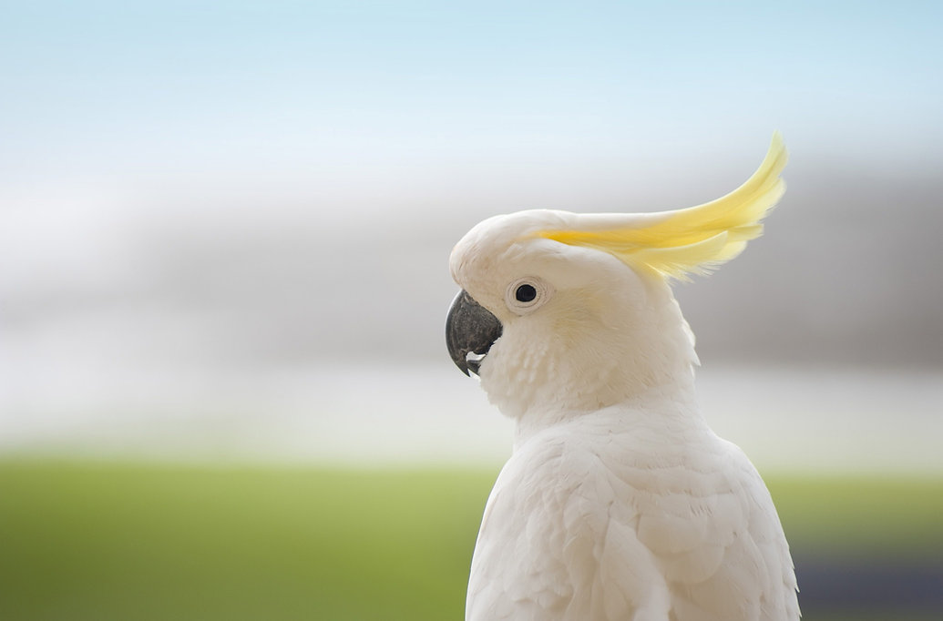 Avian and Exotics