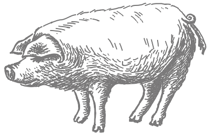 Illustrated%2520Pig_edited_edited.png