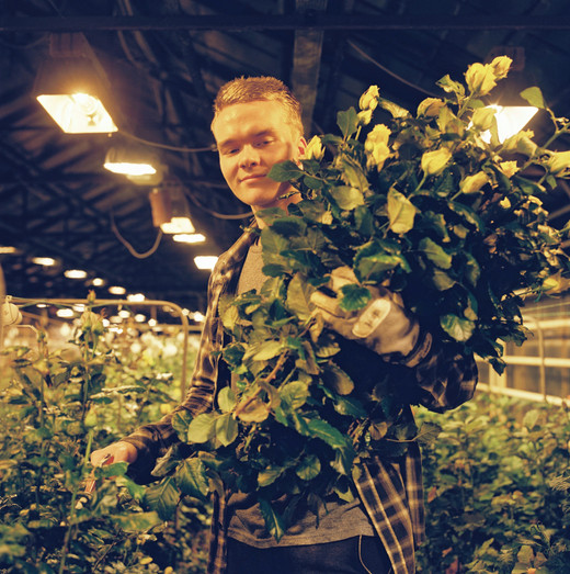 Gústi working in the greenhouses