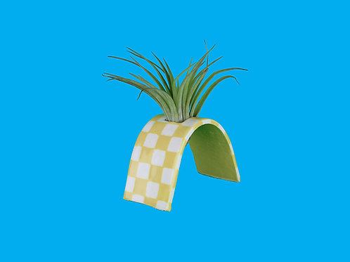 Yellow Check Air Plant Arch
