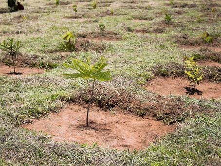Serviço Florestal do Inea publica artigo com análise de Projetos de Recuperação de Áreas Degradadas