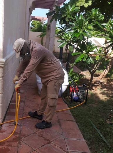 مكافحة النمل الابيض