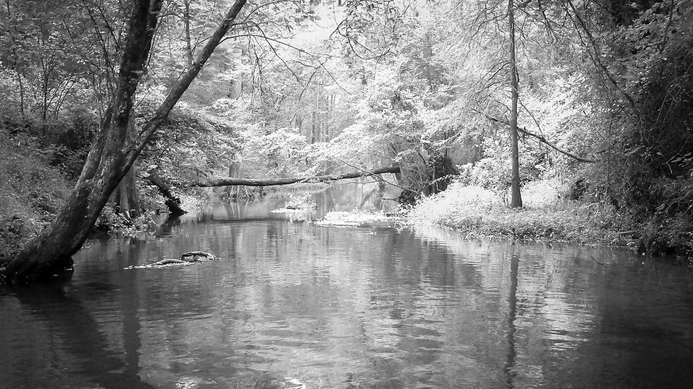 Bridge On Sinking Creek