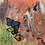 """Thumbnail: """"The Butterfly Keeper"""""""