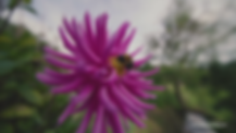 vlcsnap-2020-01-23-17h48m00s122.png
