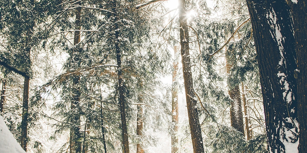 A Walk in the Winter Woods with Celeste