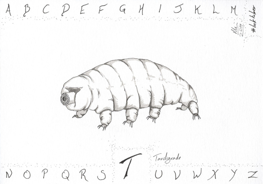 T is for Tardigrade