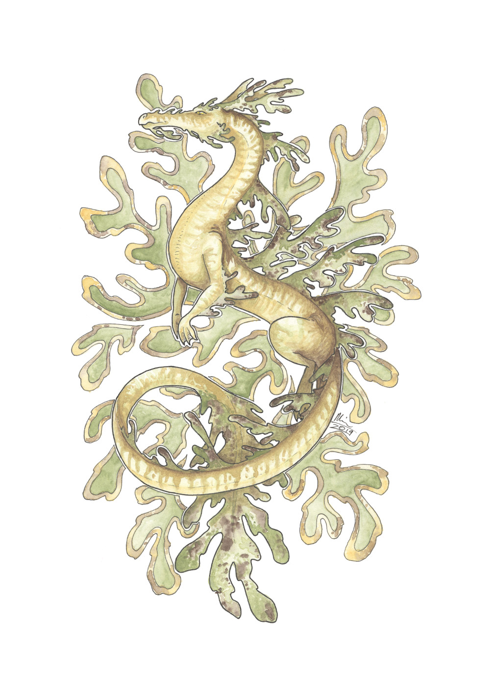 Sea Dragon - Leafy