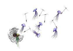 Dandelion jellies A3.jpg