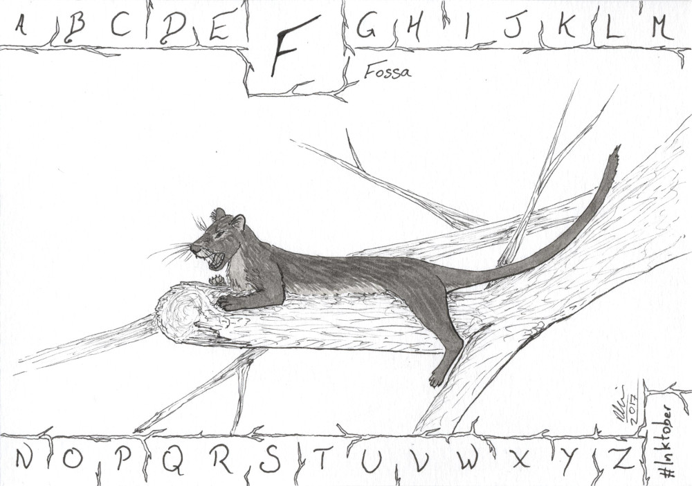 F is for Fossa