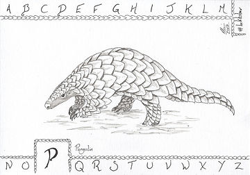 P is for Pangolin.jpeg