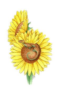 Sunflowers Outlined G.jpg
