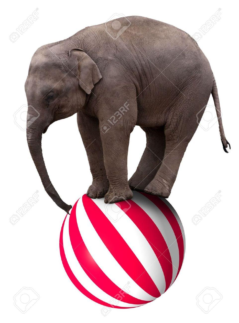 4088237-a-baby-circus-elephant-balancing-on-a-big-ball-balance.jpg