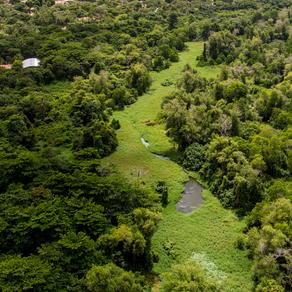 Comissão de Meio Meio Ambiente Aprova Necessidade de Comprovação de Reserva Legal para Usucapião