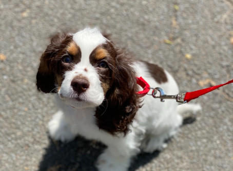 Dog 101: What a New Parent Needs to Know