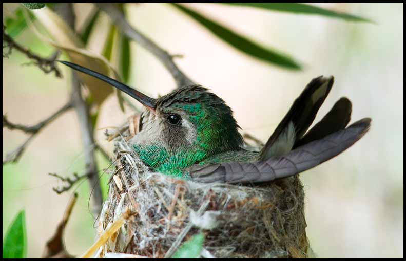 Nest and Hummer