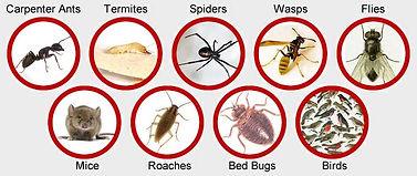Pests-Little-Bugger-Pest-Control 2.jpg