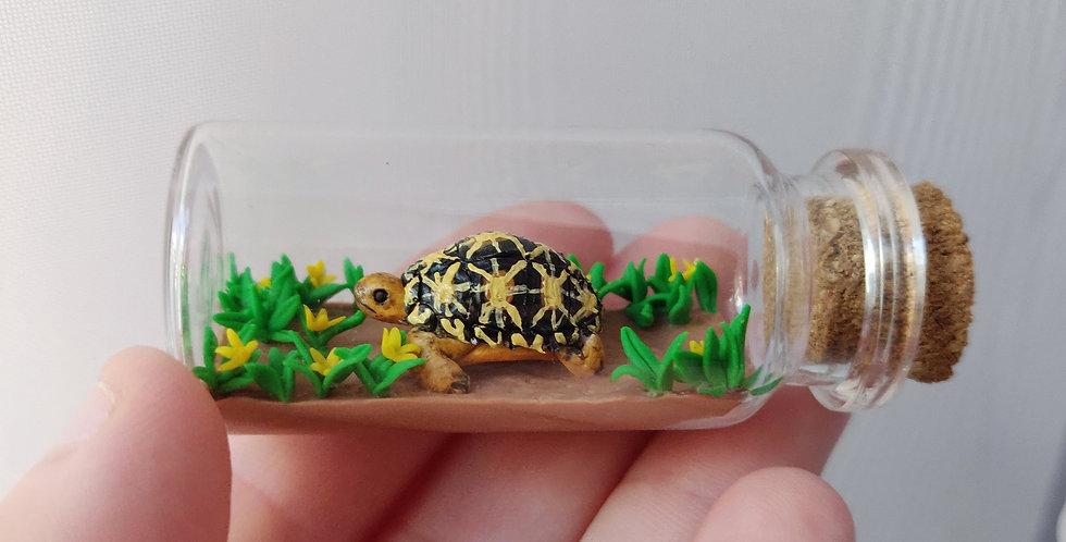 Indische Stern-Schildkröte im Blumenfeld / Flaschenkunst