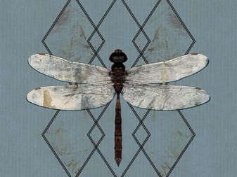 Ohhms - Close | Album Review