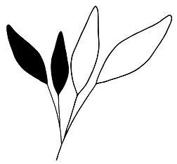 leafs big.jpg