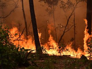 Sin tregua en combate de incendios en Michoacán: Mesa de Coordinación