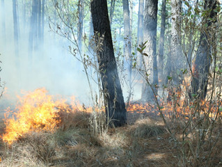 Reos en fase de preliberación refuerzan brigadas contra incendios