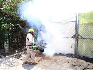 Sin tregua, lucha contra el dengue en Michoacán