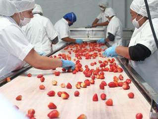 Redobla Michoacán medidas sanitarias para garantizar abasto alimentario
