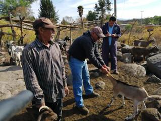 Ayuntamiento de Panindícuaro inicio programa Erradicación de Brucelosis