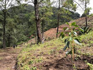 Desinstala Mesa de Seguridad Ambiental huerta irregular en predios forestales