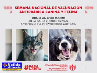 Inicia la 1ª Semana de Vacunación Canina y Felina en Tlazazalca