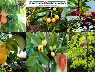 Ayuntamiento de Erongarícuaro ofrece a la población árboles frutales