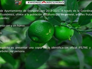 Ayuntamiento de Erongarícuaro ofrece a la ciudadanía arboles de lima, limón, y guayabos