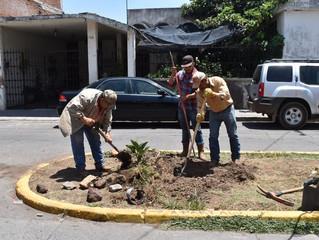 Ayuntamiento de Puruándiro Realizan Plantación de Tabachines