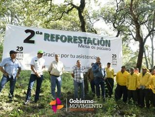 Participa el Ayuntamiento de Zacapu en la 2a Reforestación en el área de la Mesa de Púcuaro