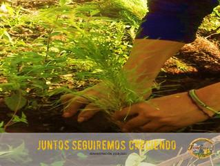 Realizo Ayuntamiento de Jiménez plantación de 500 árboles en el cerro de la antena
